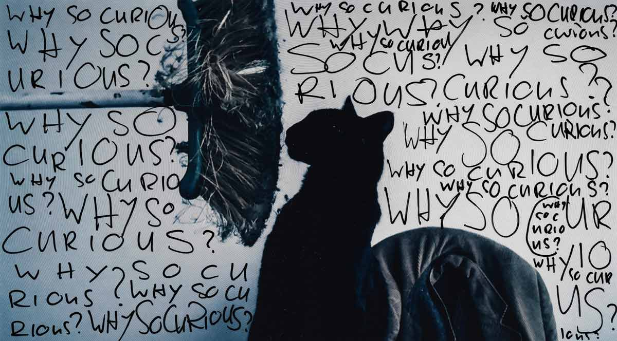 Black Cat - Why so Curious